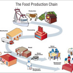 food_production_chain_400px